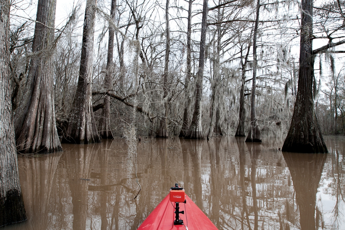 Two O'clock Bayou more swampy scene with kayak - Feb 2014